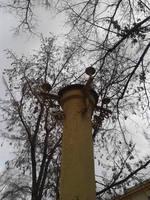 http://images.vfl.ru/ii/1616760162/8a434269/33827642_s.jpg