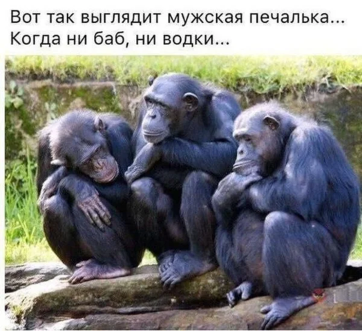 http://images.vfl.ru/ii/1621524616/306e7be1/34525107_m.png