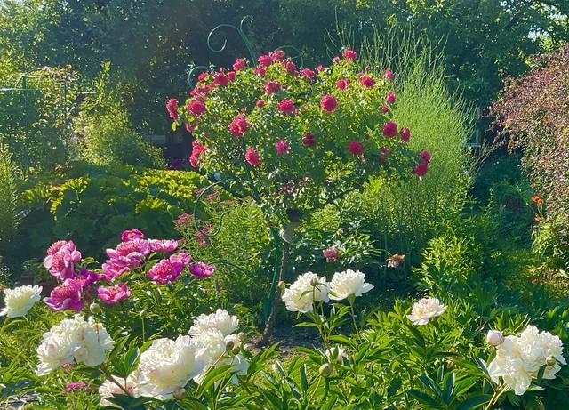 http://images.vfl.ru/ii/1624202815/7bd68b02/34887387_m.jpg