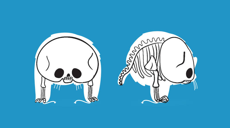 russian-olympic-mascots-x-ray-01