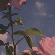 http://images.vfl.ru/ii/1632658617/cce5b30e/36015287.jpg