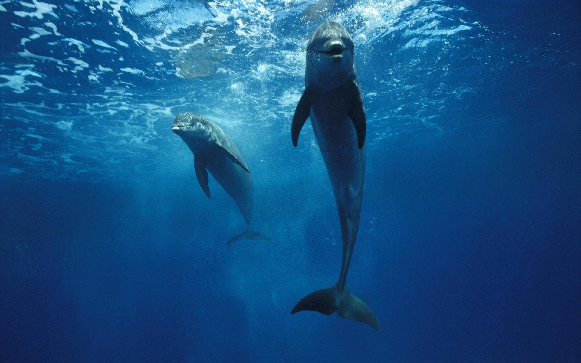 картинки с дельфинами под водой считали средством развлечения