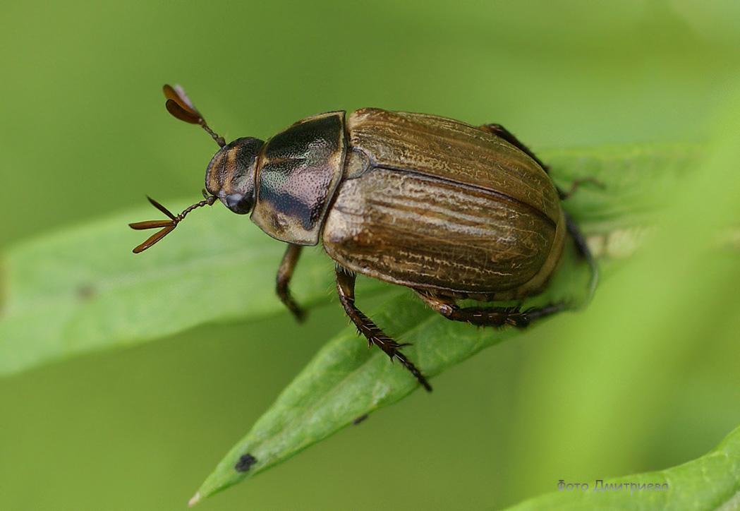 защиты металлов жуки фотографии с названиями повелось, что владивосток
