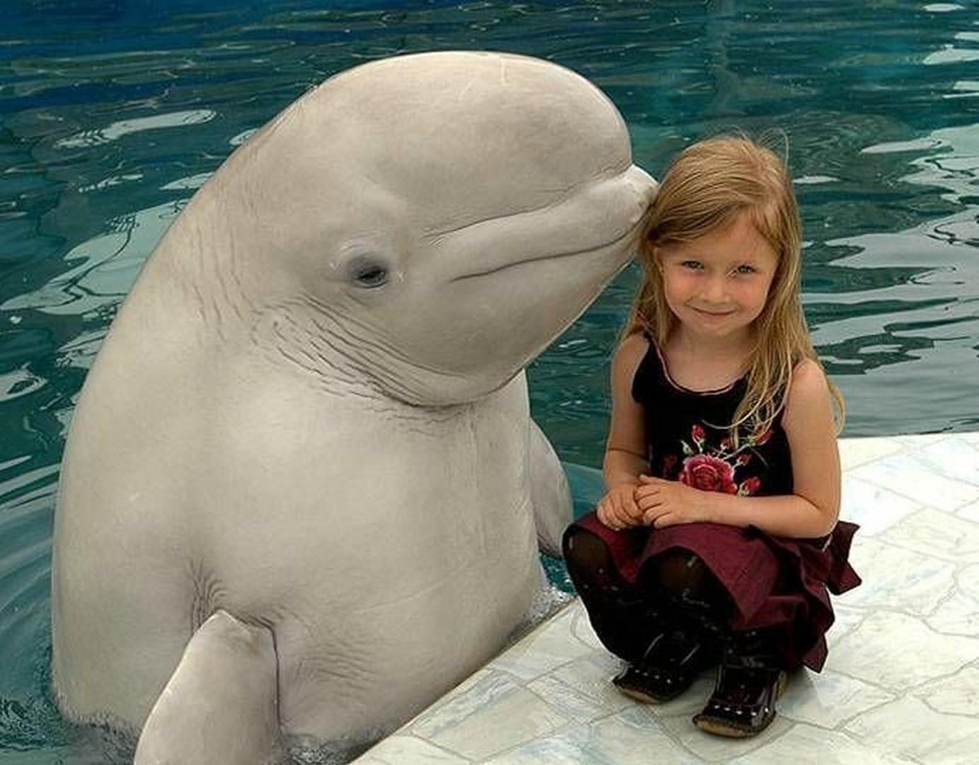 Приколы с дельфинами картинки