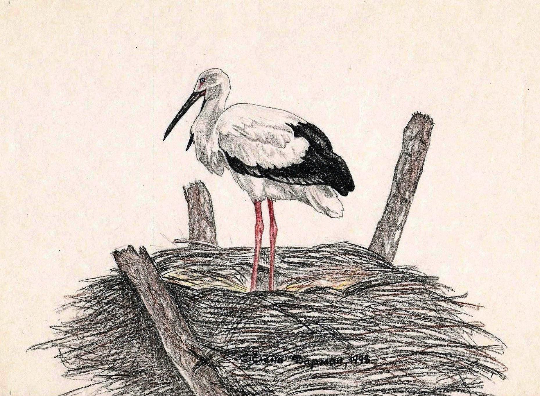 Рисунки аиста в гнезде