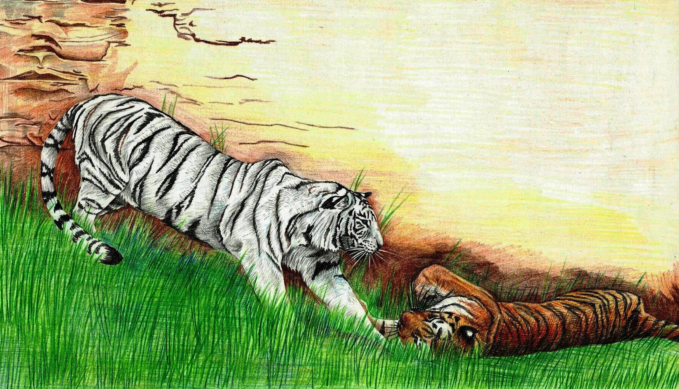 картинки тигров и тигрят карандашом это трехколесный