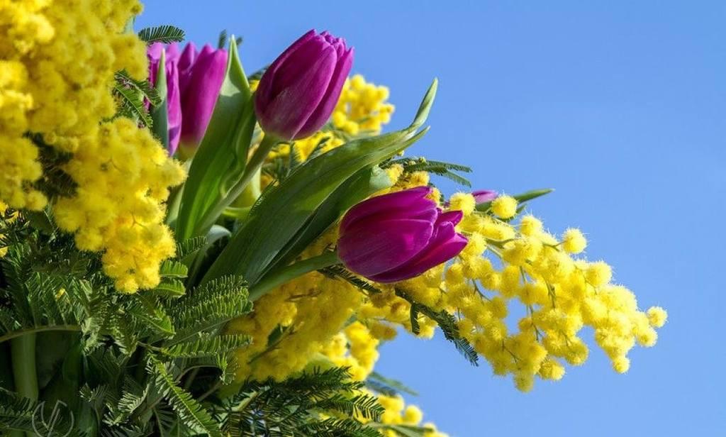 Тюльпаны и мимоза картинки, поздравления днем